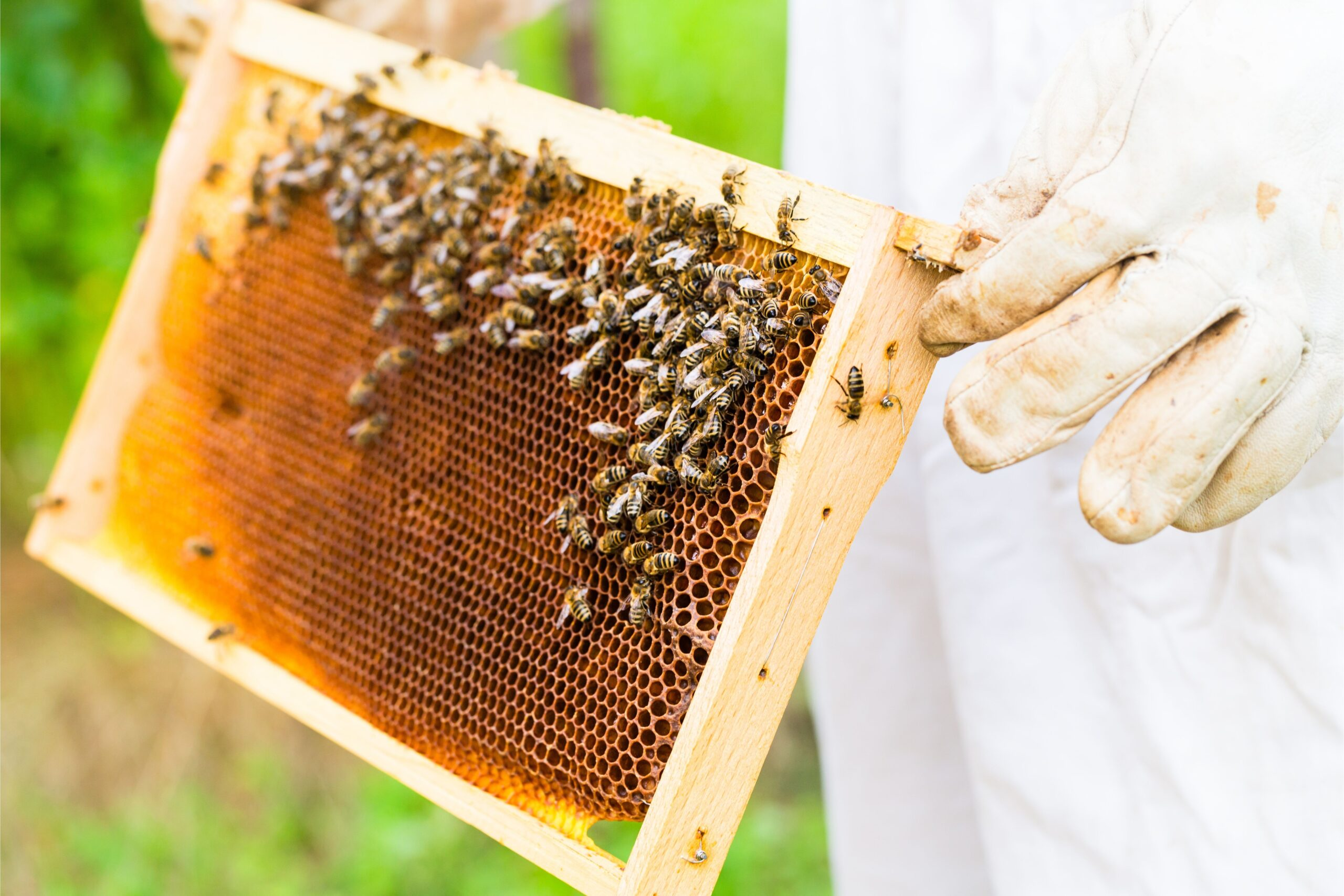μελισσοκομία1 scaled